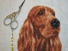 Bradhal - Red setter