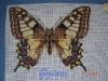 gzina -Motýl