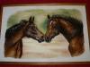 Ivaver - koně