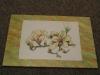 mammillaria  - magnolie