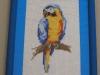 mammillaria  - Papoušek
